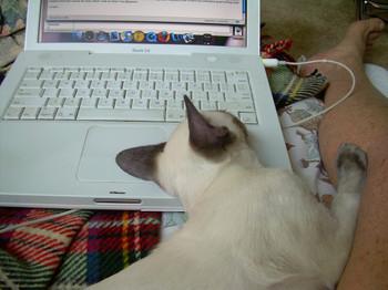 Catblogging